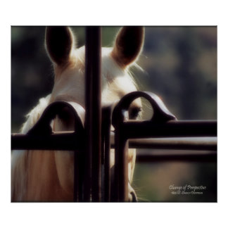 Poster, Change of Perspective, Horse, Farm, Rodeo Poster