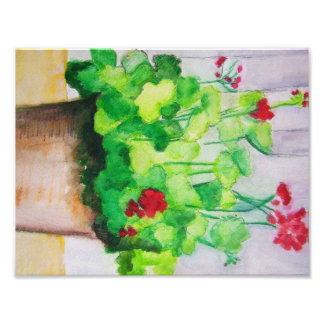 Poster - Geraniums In August