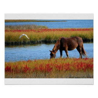 Poster horse in the marshes