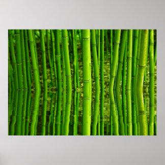 Poster  Kunstdruck  Fineartprint  Bambus