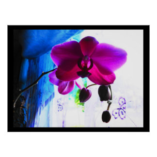 Poster, Magenta Orchid, color background options Poster