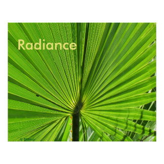 Poster - Palm Frond in the Sun
