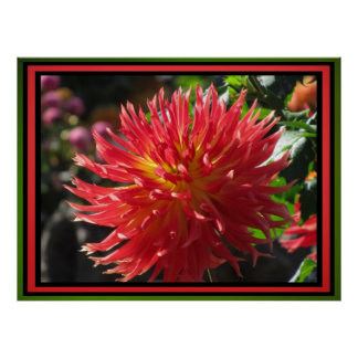 Poster - Red Dahlia Flower