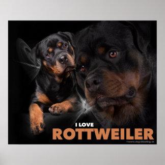 Poster Rottweiler