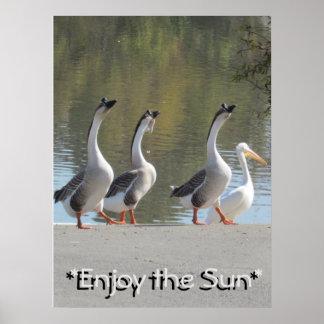Poster - Sun Loving Geese