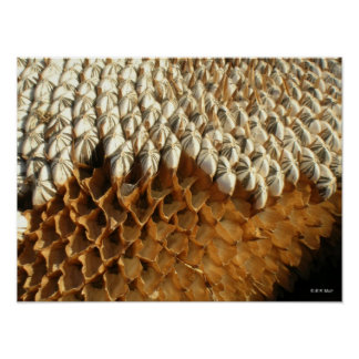 Poster - sunflower seeds