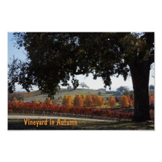 Poster: Vineyard and Oak Tree in Autumn Colors Poster
