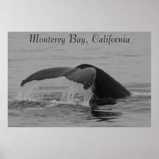Poster, Whale Fluke, Monterey Poster