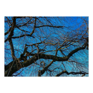 Poster with tree branches and blue sky