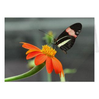 Postman butterfly card