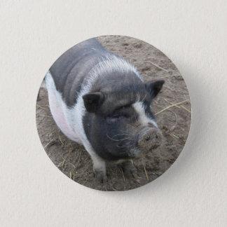 Pot Bellied Pig 2 Inch Round Button