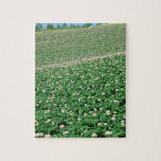 Potato Field 3 Puzzle