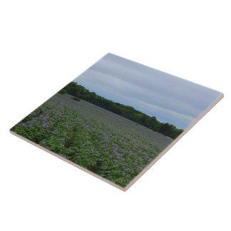 Potato Field Summer 2016 Tile