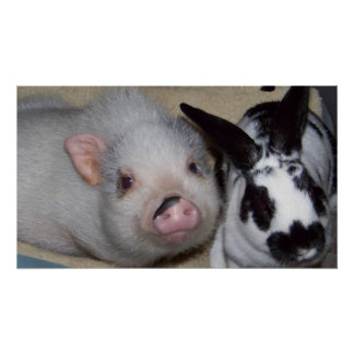 Potbelly Pig & Friend Poster