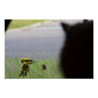 Potential Lunch - Cat and Bird Poster