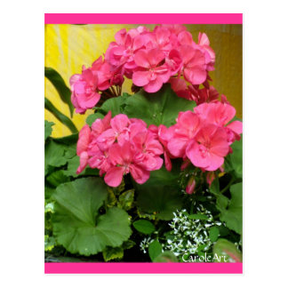 """Potted Coral Pink Geraniums"" Notes & Stamps Postcard"