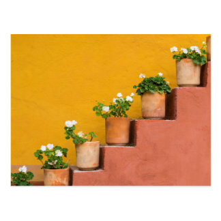 Potted flowers on staircase postcard