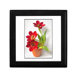 Potted Mature Red Tulips Photograph Trinket Boxes