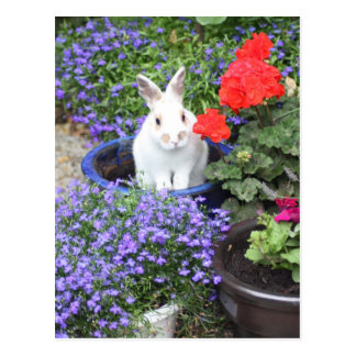 Potted rabbit postcard