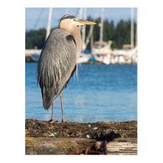 Poulsbo Great Blue Heron perched Postcard