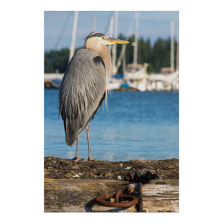Poulsbo Great Blue Heron perched Poster
