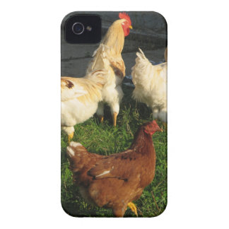 Poultry iPhone 4 Cover