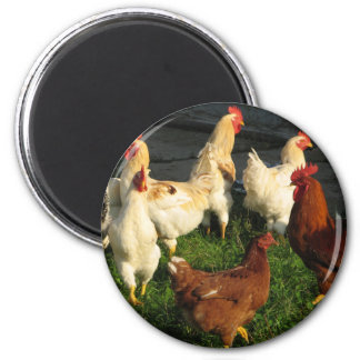Poultry Magnet