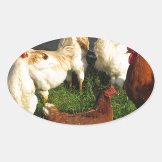 Poultry Oval Sticker