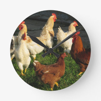 Poultry Wall Clocks