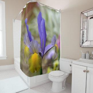 Pourpre et rideau en douche d'iris d'or