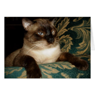 Pouty Face Siamese Cat Note Card
