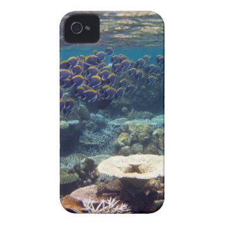Powder Blue Surgeon Fish Case-Mate iPhone 4 Case
