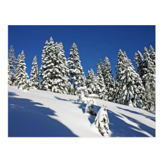 Powder Morning, Alpine Meadows... Postcard