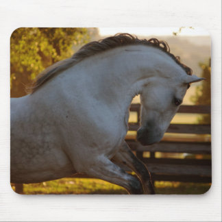 Power Of An Andalusian Mare Mouse Pad