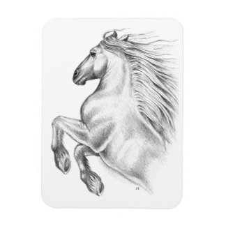 Powerful Andalusian Horse Magnet