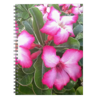 Ppink Note Books
