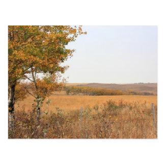 Prairie Autumn Postcard