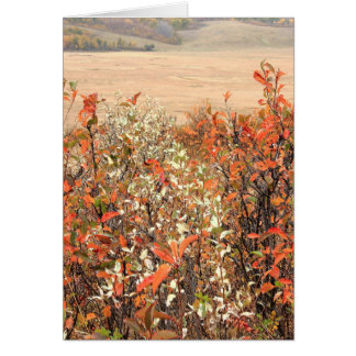 Prairie Buckbrush Card