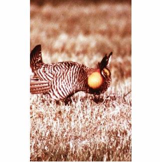 Prairie Chicken on Fergus Falls Prairie Cut Out