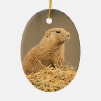 Prairie Dog Aint I Cute Ornament