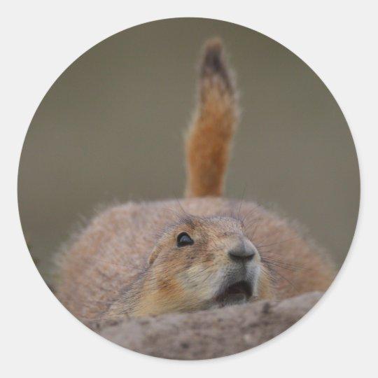 prairie dog classic round sticker