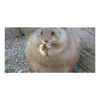 prairie dog photo card template