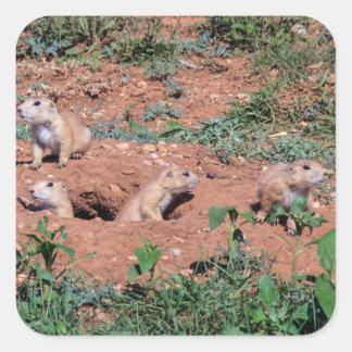 Prairie Dog Pups Square Sticker