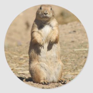 Prairie Dog Sticker