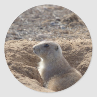 Prairie Dog Stickers