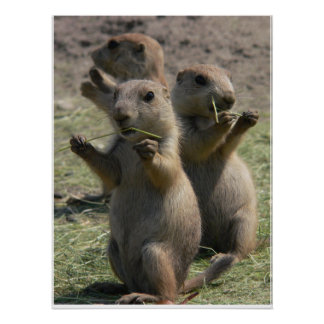 PRAIRIE DOGS THAT LUNCH POSTER