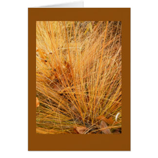 Prairie Dropseed in Fall Blank Note Card