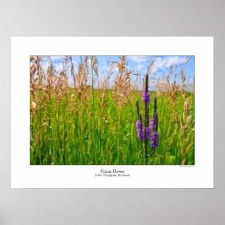 Prairie Flower Poster