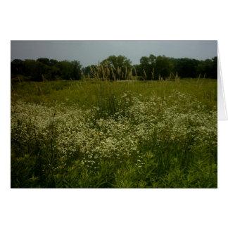 Prairie Flowers Card