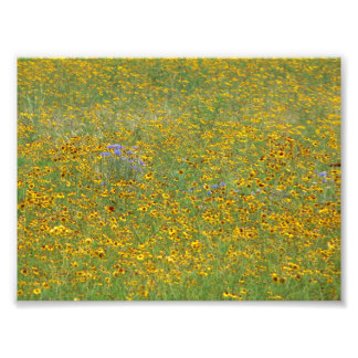 Prairie flowers photo print